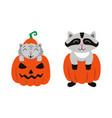 flat cat sitting at pumpkin racoon set vector image vector image