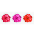 set colorful naturalistic blossoming pink red vector image vector image