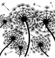 Dandelion silhouette-background vector image