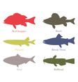 North American food fish vector image