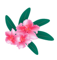 Pink Rhododendron with Green Leaves on White vector image