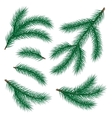 set of fir branch vector image vector image