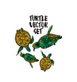 turtle set vector image