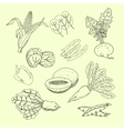 Collection of hand-drawn vegetables and fruits vector image vector image