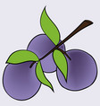 hand drawn of plum in cartoon style vector image