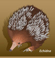 realistic picture of echidna close-up isolated vector image