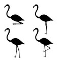 set of silhouettes of flamingo in different poses vector image vector image