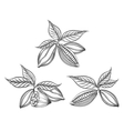 Cacao beans engraved vector image vector image