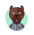 cartoon cute pitbull dog isolated objects vector image