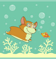cartoon welsh corgi dog diving in the ocean vector image vector image