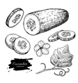 Cucumber hand drawn set Isolated cucumber vector image vector image