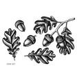 set hand drawn black and white oak vector image