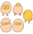 set of chick vector image vector image