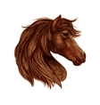 Brown horse head sketch with arabian racehorse vector image vector image