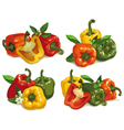 Capsicum peppers vector image