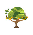 green tree with oranges garden plant with ripe vector image vector image