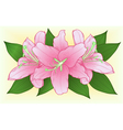bouquet of pink roses with green leaves vector image