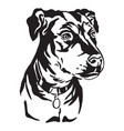 decorative portrait of mongrel dog vector image vector image