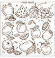 fruits sketch icons farm fresh exotic vector image