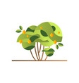 green tree with lemons garden shrub with ripe vector image vector image