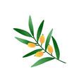 olive branch cartoon twig vector image