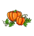 Pumpkin drawing Isolated cartoon vegetable vector image vector image