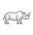 rhinoceros sketch vector image vector image