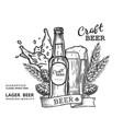 beer comp vector image vector image