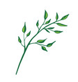 branch flat vector image