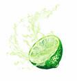 half citrus fruit with splash juice vector image