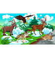 MOUNTAIN Animals vector image