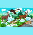 MOUNTAIN Animals vector image vector image