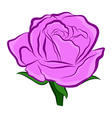 purple rose vector image vector image