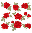 red roses isolated on white hand drawn flowers vector image vector image