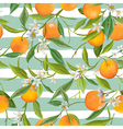 Seamless Pattern Orange Fruits Background vector image vector image