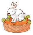 white rabbit and carrots on white background vector image