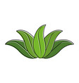green leaves tropical natural foliage image vector image