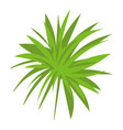papyrus frond icon cartoon style vector image vector image