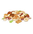 pile different nuts organic food cartoon vector image vector image