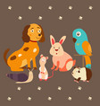 images of domestic animals cat parrot dog snail vector image