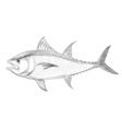 Atlantic bluefin tuna vector image vector image