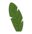 banana leaf icon cartoon style vector image vector image