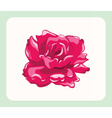 Bright Roses isolated vector image