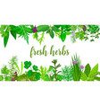 popular fresh realistic herbs and flowers logo vector image vector image