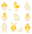 set of cartoon chickens for easter design vector image