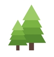 Christmas tree spruce vector image