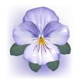Pansy viola flower bloom vector image