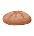 brown bread loaf rye bread roll baked food vector image vector image