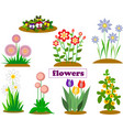 isolates from garden and forest flowers of spring vector image vector image