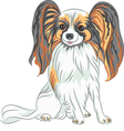 Papillon dog breed vector image vector image